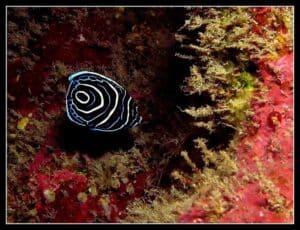 Plongée St Leu 974 BLEU OCEAN