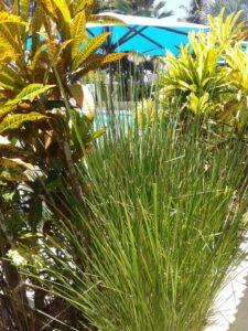 Décoration et drainage de jardin avec le vétiver