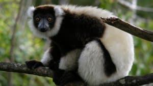 Ivoloina Parc naturel balade Zoo Tamatave Mada