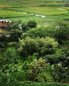 Somptua Garden Appartement Antananarivo Madagascar