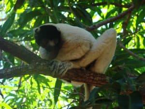 Karibu Lodge Tourisme Activités Circuits Visites Majunga Madagascar